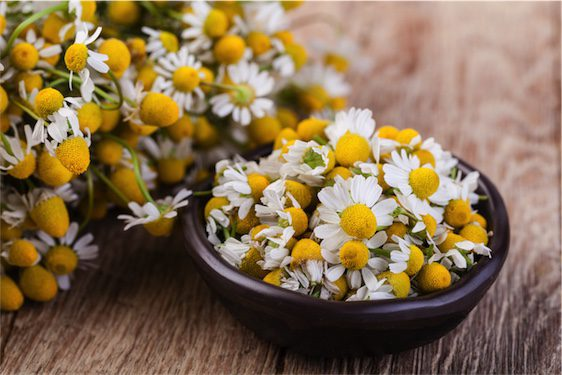 Know your herb: Chamomile