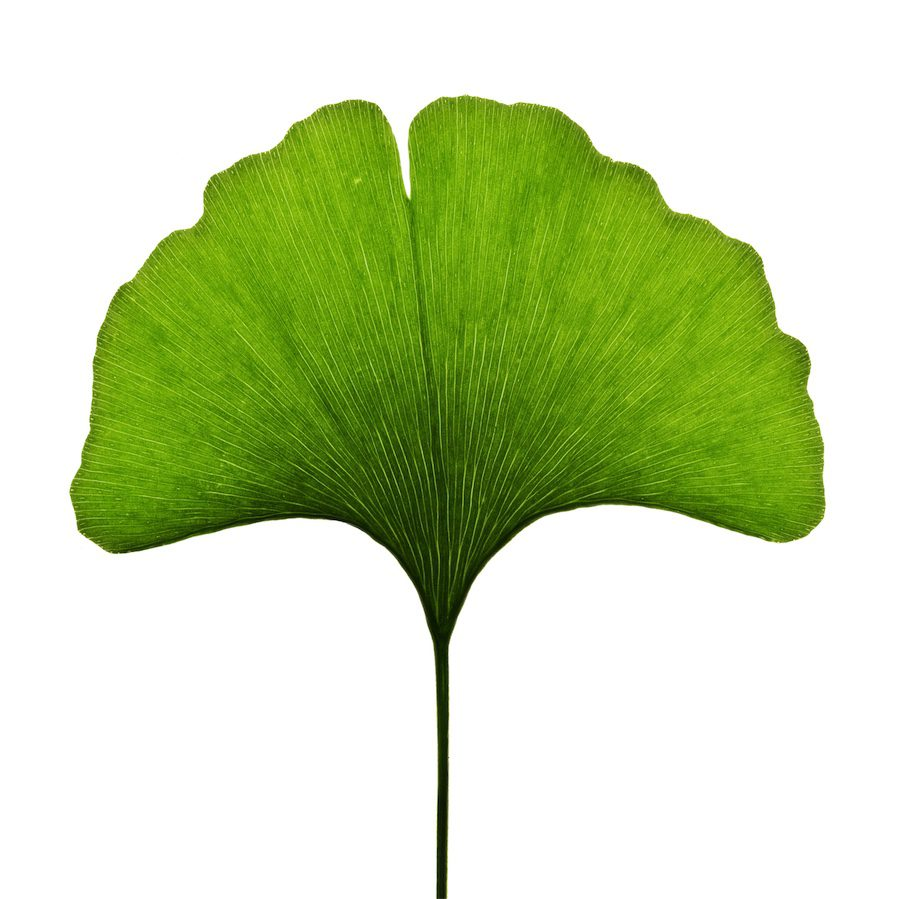Ginkgo leaf with review consultation booking