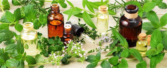 naturopath and herbal medicine in brisbane for immune health