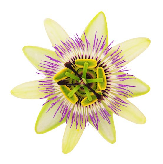 passionflower image for Book initial naturopath consultation