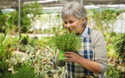 What herbs are good for menopause?