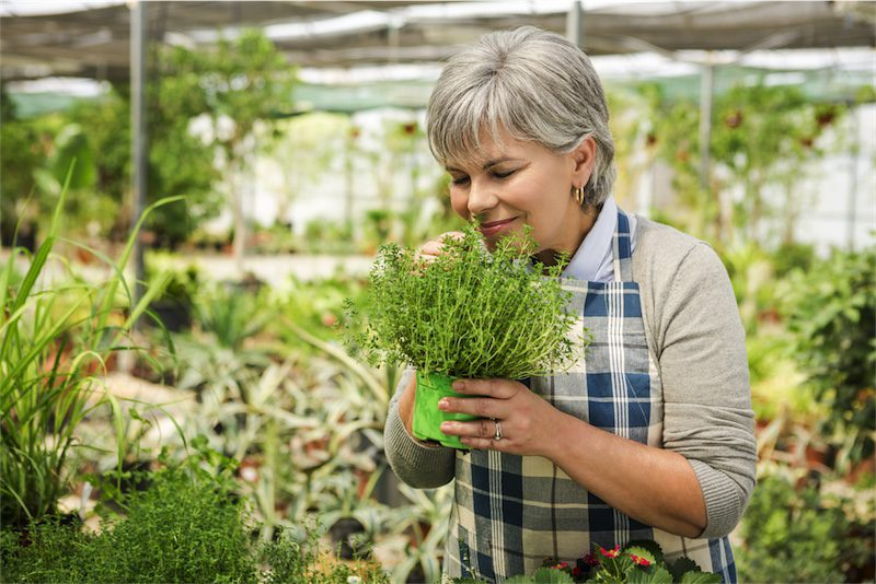 Herbs for perimenopause